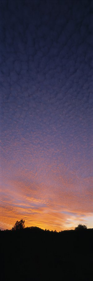 Marbled Sky